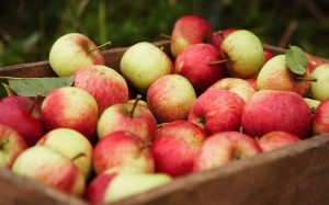 des pommes dans une caisse