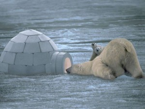 wpid-polar-bear-igloo.jpg.jpeg