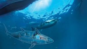 drone sous-marin espion thon