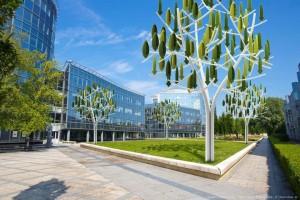 arbre a vent ecologie